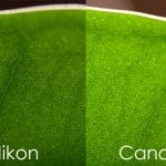 macro-leaf-nikon-105mm-VR-vs-canon-100mm-IS1
